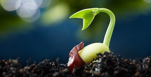 Planting the Seeds for Growth